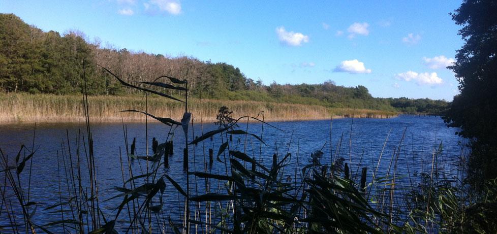 Prerow Ostsee Fischland Darß
