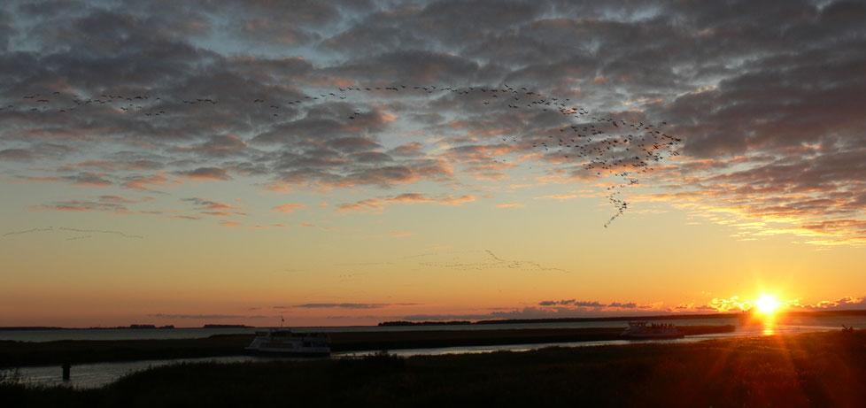 Prerow Kraniche Fischland Darß